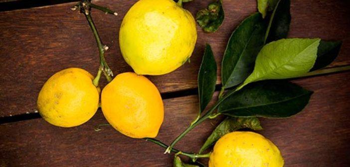 Citrus teszt