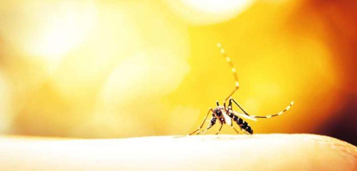 A trópusi betegségek terjedése rendkívül veszélyes Európára nézve is